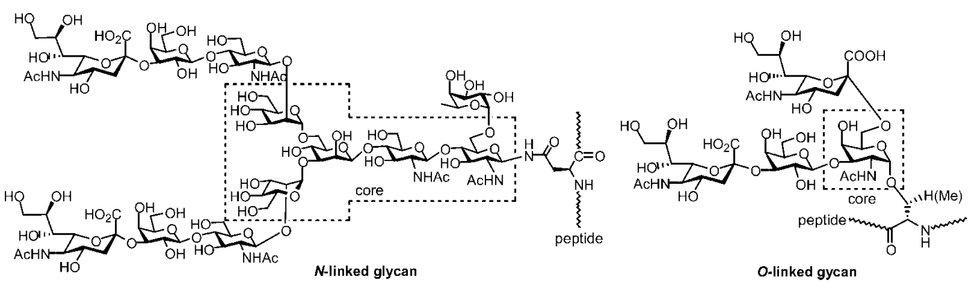 Fig 1. Examples of N- and O-linked glycans found in mammalian glycopeptides