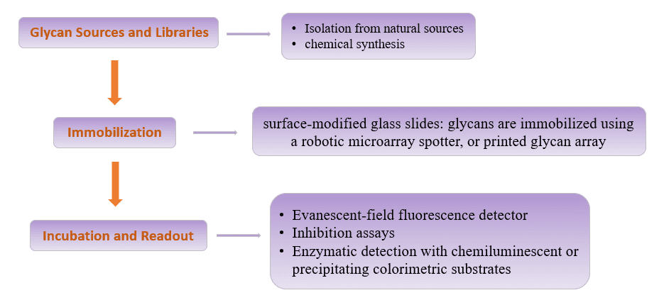 Flow chart of glycan microarray assay - CD BioGlyco