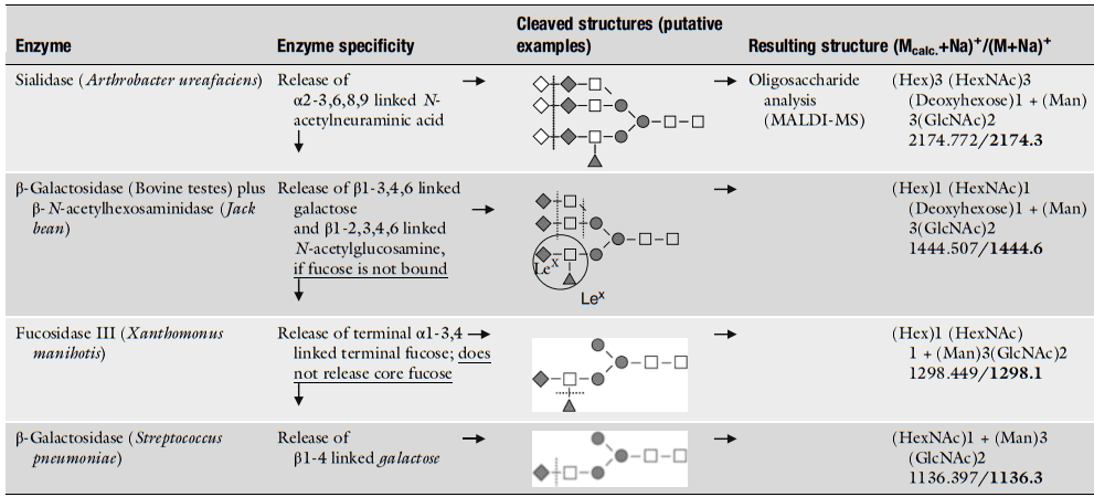 Enzymatic sequencing procedure for the identification of Lewis structures, demonstrated for an α1-acid glycoprotein-linked N-glycan