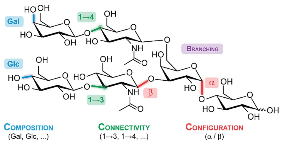 A generic glycan illustrating the structural features which lead to the immense diversity in this class of biomolecules