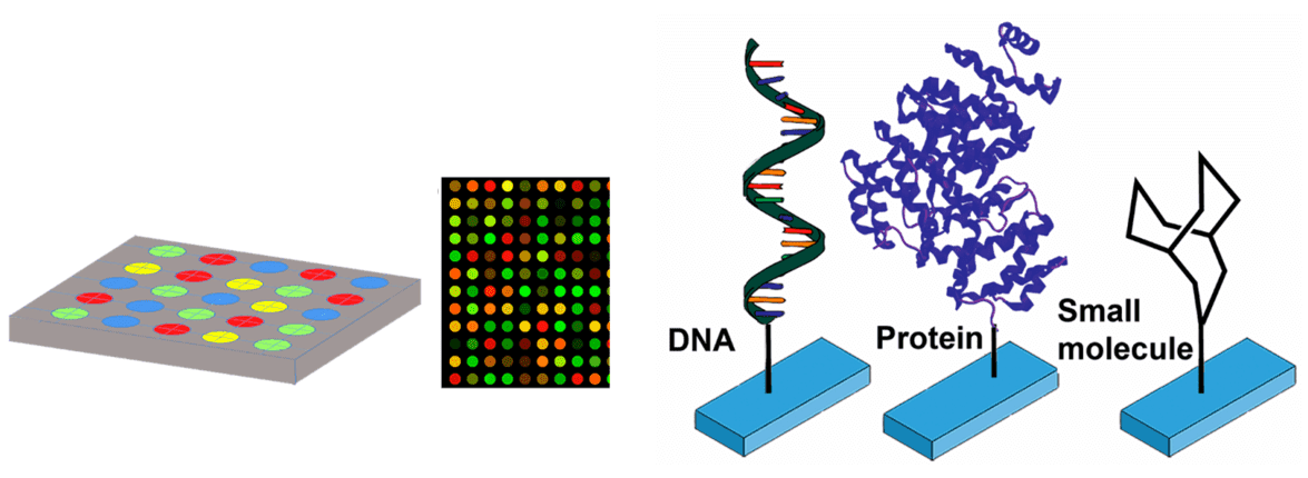 Fig 1. Schematic depiction of a microarray and examples of probe molecules attached to a microarray spot