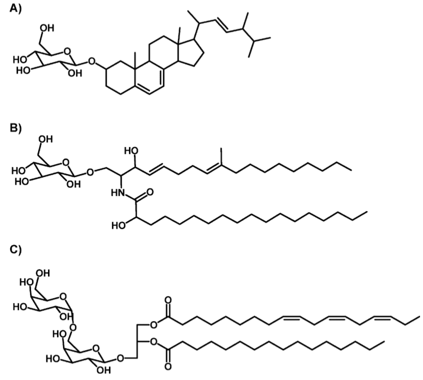Fig 1. Glycolipids with sterol, ceramide or diacylglycerol as hydrophobic backbone