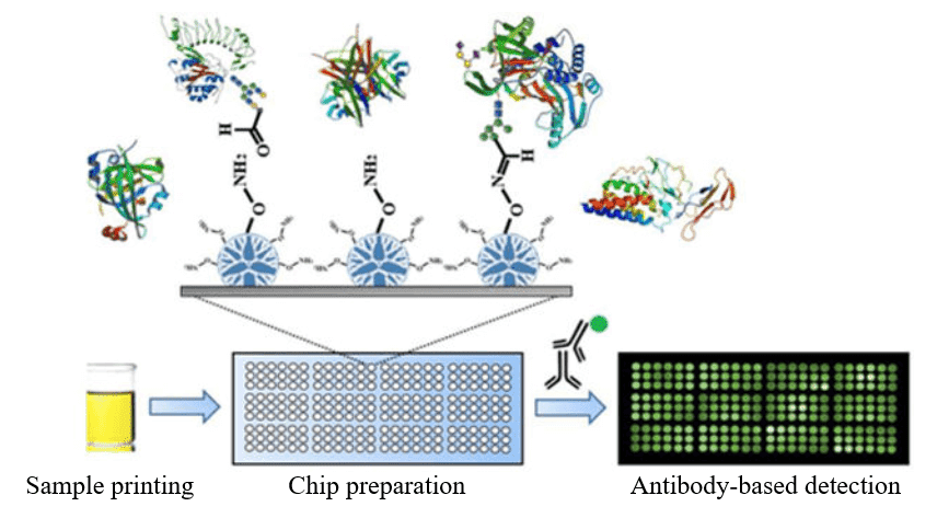 Design and experimental workflow for glycoprotein microarray