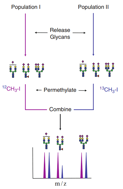 Fig 1. Flow chart for quantitative glycan analysis using isotopic labeling during the permethylation step