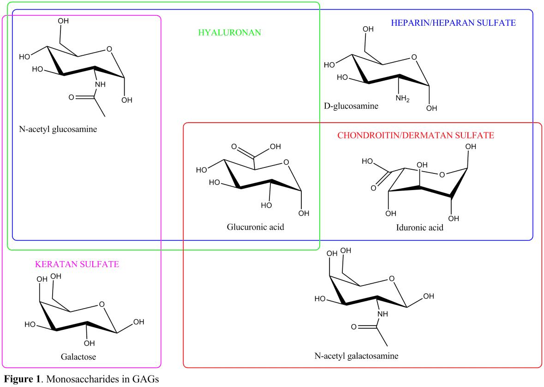 Fig 1. Monosaccharides in GAG