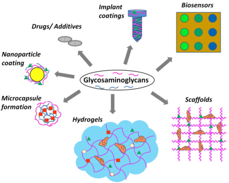 Fig 2. Different applications of glycosaminoglycans