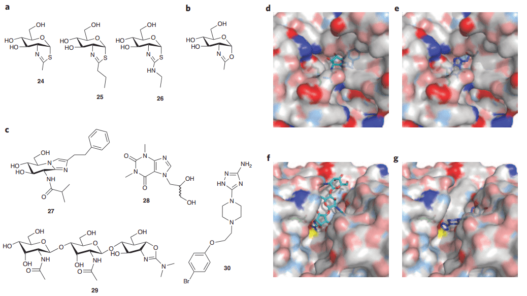 Fig 1. Exo- and endo-acting glycoside hydrolases can be inhibited by carbohydrate-based and medicinal chemistry-based inhibitors