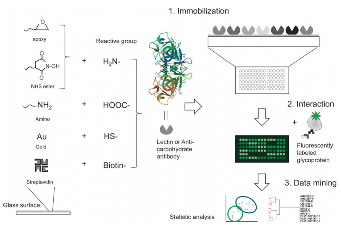 A general scheme to make lectin microarray substrates and subsequent procedures for glycan profiling