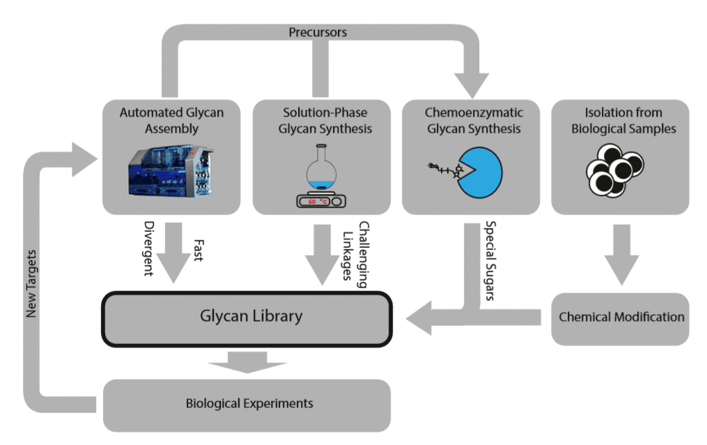Strategies to procure glycans for microarray experiments