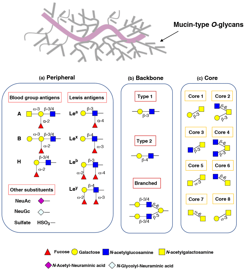 Schematic representation of structural elements in mucin type O-glycans