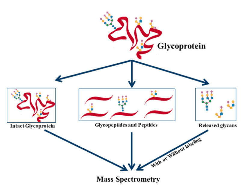 Graphical summary of MS technologies for the analysis of glycoproteins