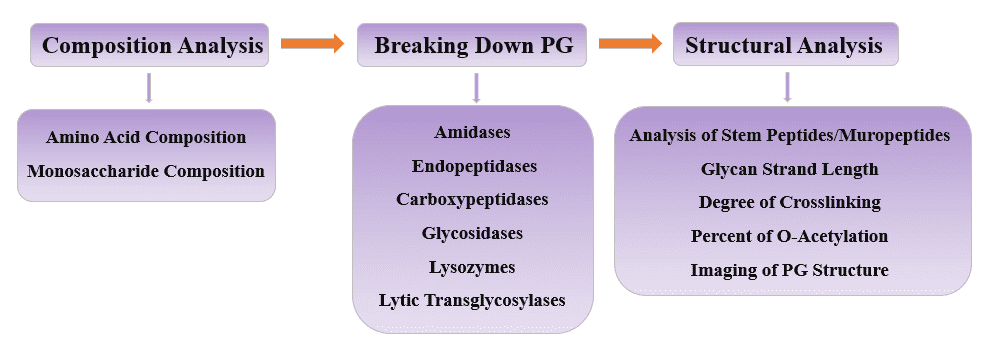 Fig 2. Flow chart of peptidoglycan structure analysis - CD BioGlyco