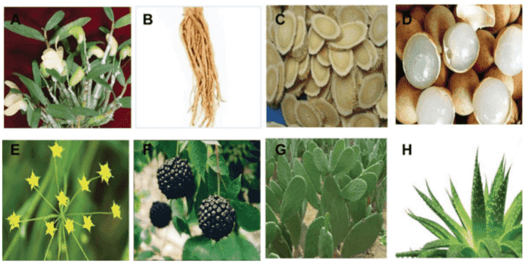 Fig 1. Some plants containing polysaccharides