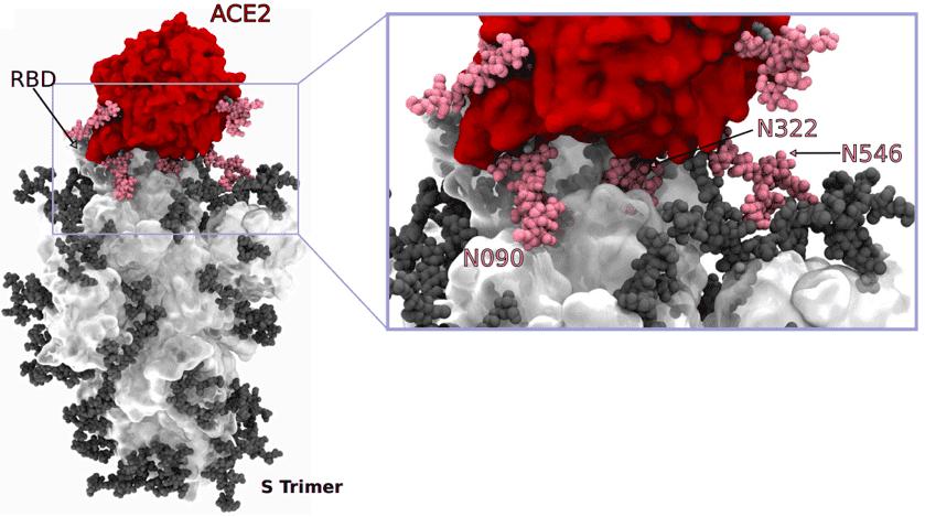 SARS-CoV-2 Glycosylation Profiling