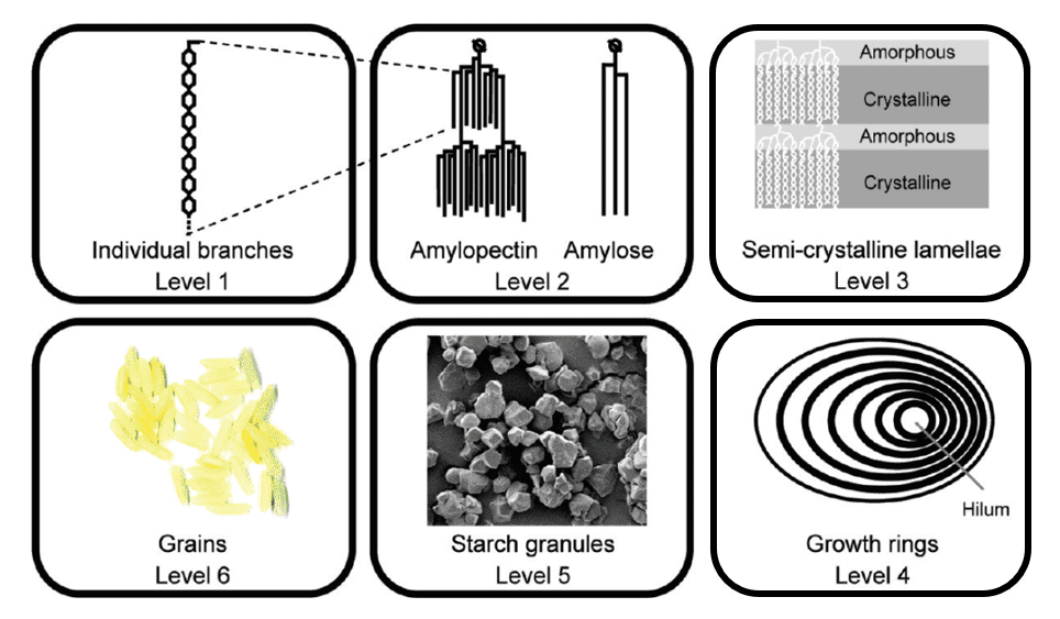 Fig 1. Six levels of starch structures